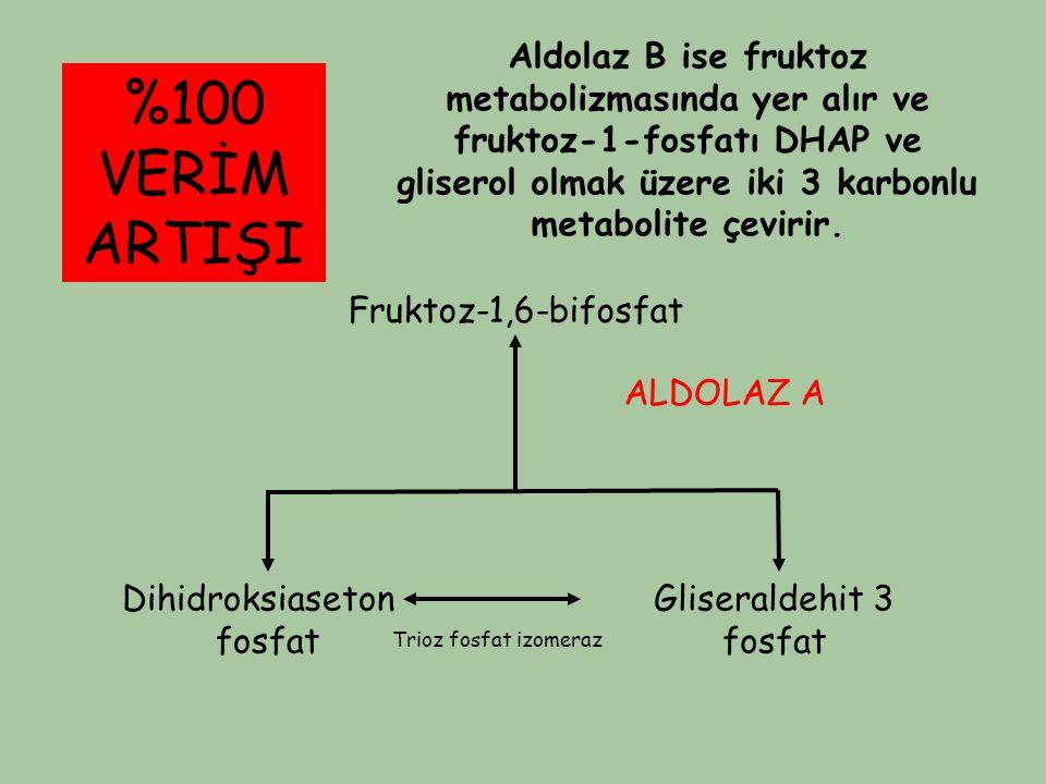 Fruktoz-1,6-bifosfat Dihidroksiaseton fosfat Gliseraldehit 3 fosfat ALDOLAZ A Trioz fosfat izomeraz %100 VERİM ARTIŞI Aldolaz B ise fruktoz metabolizm