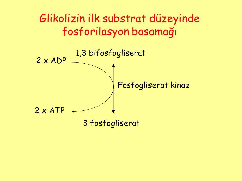 1,3 bifosfogliserat 3 fosfogliserat Fosfogliserat kinaz 2 x ADP 2 x ATP Glikolizin ilk substrat düzeyinde fosforilasyon basamağı