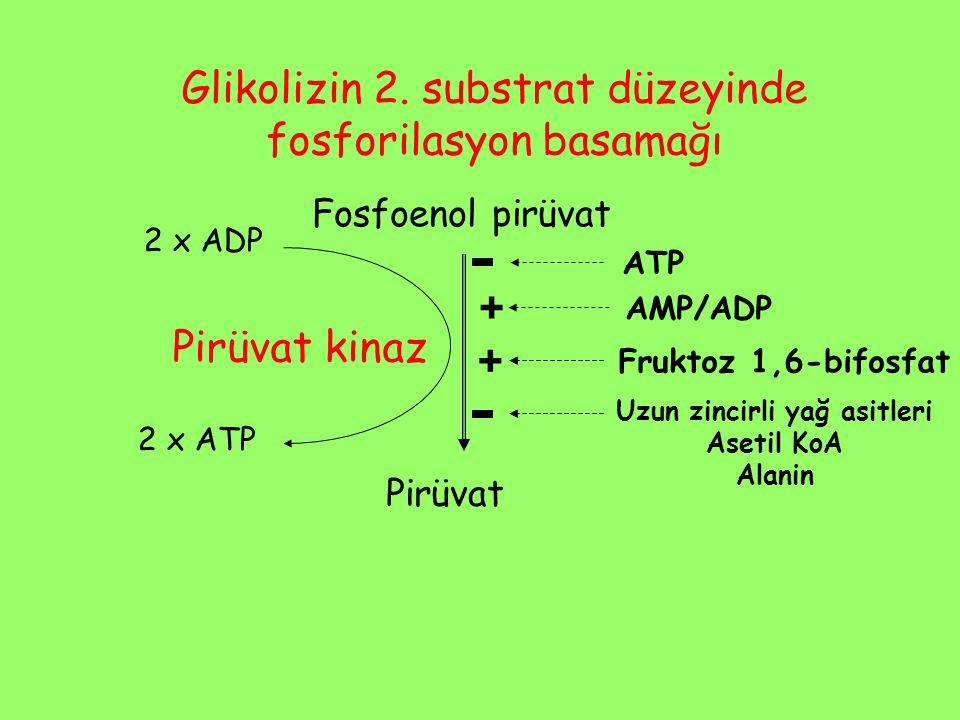 Fosfoenol pirüvat Pirüvat Pirüvat kinaz 2 x ADP 2 x ATP Glikolizin 2. substrat düzeyinde fosforilasyon basamağı ATP Fruktoz 1,6-bifosfat + AMP/ADP Uzu