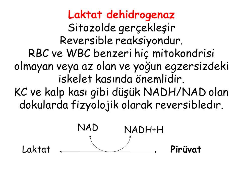 Pirüvat Laktat NAD NADH+H Laktat dehidrogenaz Sitozolde gerçekleşir Reversible reaksiyondur. RBC ve WBC benzeri hiç mitokondrisi olmayan veya az olan