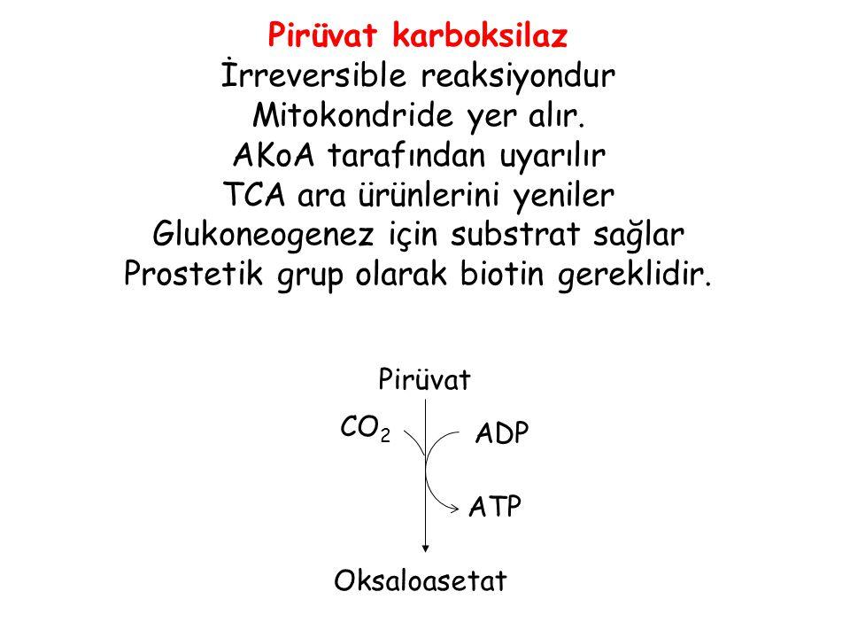 ADP ATP CO 2 Oksaloasetat Pirüvat karboksilaz İrreversible reaksiyondur Mitokondride yer alır. AKoA tarafından uyarılır TCA ara ürünlerini yeniler Glu