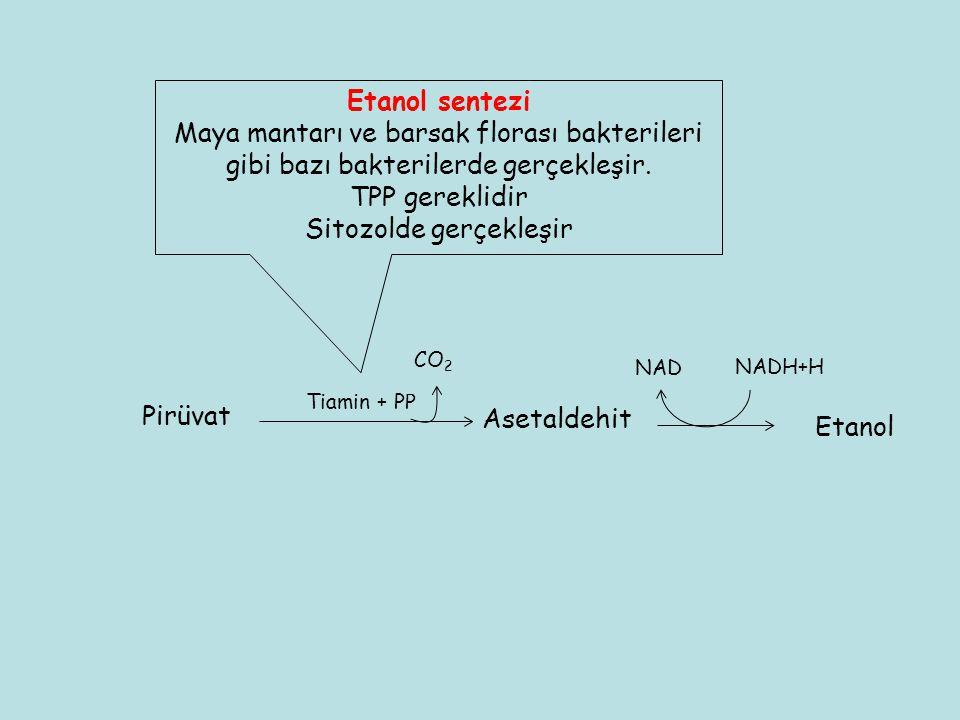 Tiamin + PP CO 2 Asetaldehit Etanol NAD NADH+H Etanol sentezi Maya mantarı ve barsak florası bakterileri gibi bazı bakterilerde gerçekleşir. TPP gerek