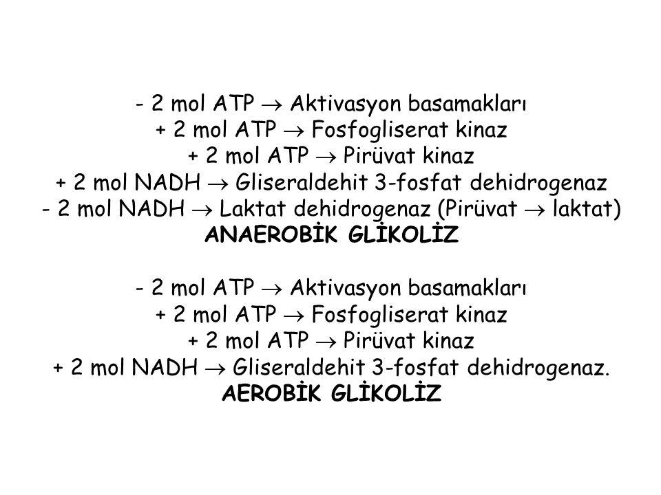 - 2 mol ATP  Aktivasyon basamakları + 2 mol ATP  Fosfogliserat kinaz + 2 mol ATP  Pirüvat kinaz + 2 mol NADH  Gliseraldehit 3-fosfat dehidrogenaz