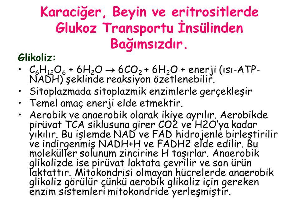 Karaciğer, Beyin ve eritrositlerde Glukoz Transportu İnsülinden Bağımsızdır. Glikoliz: C 6 H 12 O 6 + 6H 2 O  6CO 2 + 6H 2 O + enerji (ısı-ATP- NADH)