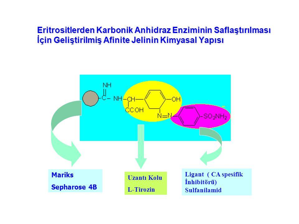 Eritrositlerden Karbonik Anhidraz Enziminin Saflaştırılması İçin Geliştirilmiş Afinite Jelinin Kimyasal Yapısı Mariks Sepharose 4B Uzantı Kolu L-Tirozin Ligant ( CA spesifik İnhibitörü) Sulfanilamid