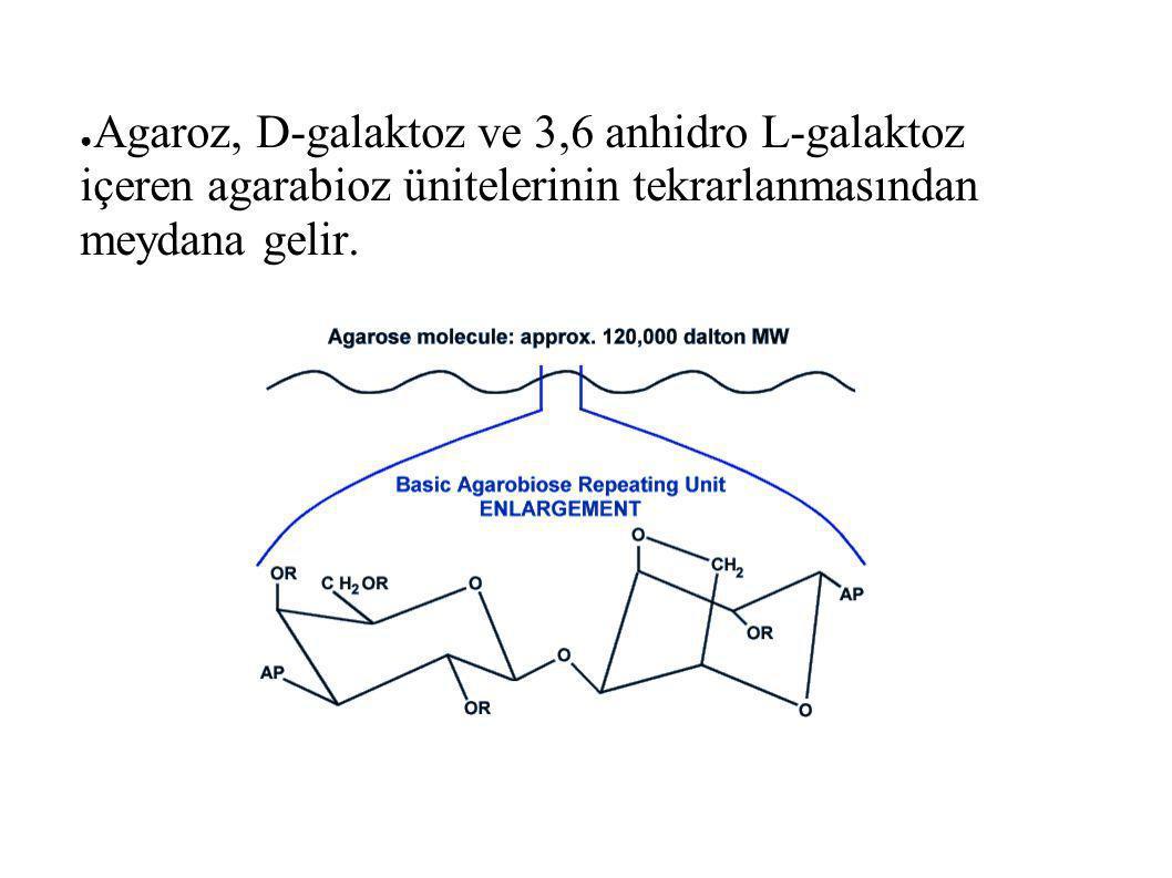 ● Agaroz, D-galaktoz ve 3,6 anhidro L-galaktoz içeren agarabioz ünitelerinin tekrarlanmasından meydana gelir.