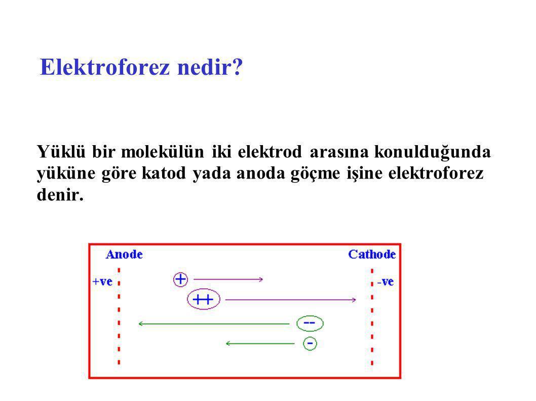 Elektroforez nedir? Yüklü bir molekülün iki elektrod arasına konulduğunda yüküne göre katod yada anoda göçme işine elektroforez denir.
