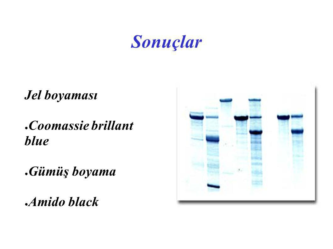 Sonuçlar Jel boyaması ● Coomassie brillant blue ● Gümüş boyama ● Amido black