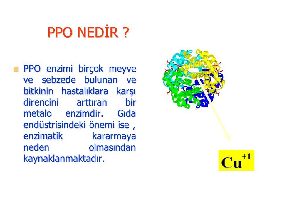 PPO NEDİR ? PPO enzimi birçok meyve ve sebzede bulunan ve bitkinin hastalıklara karşı direncini arttıran bir metalo enzimdir. Gıda endüstrisindeki öne