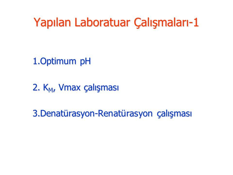 Yapılan Laboratuar Çalışmaları-1 1.Optimum pH 2. K M, Vmax çalışması 3.Denatürasyon-Renatürasyon çalışması