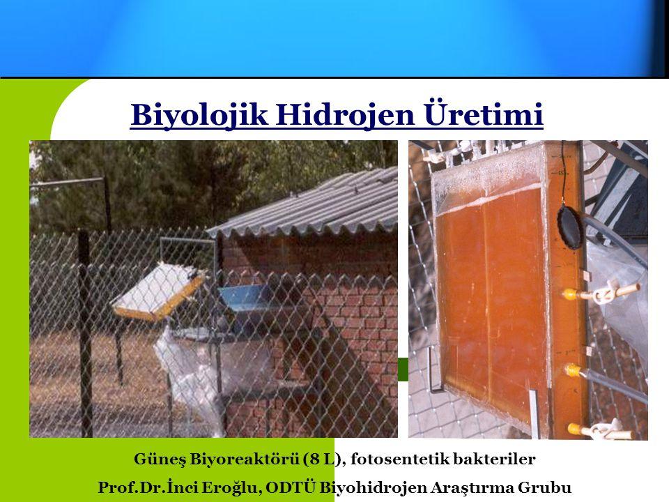 Hidrojen Gazı Üretimi Biyolojik Hidrojen Üretimi Prof.Dr.İnci Eroğlu, ODTÜ Biyohidrojen Araştırma Grubu