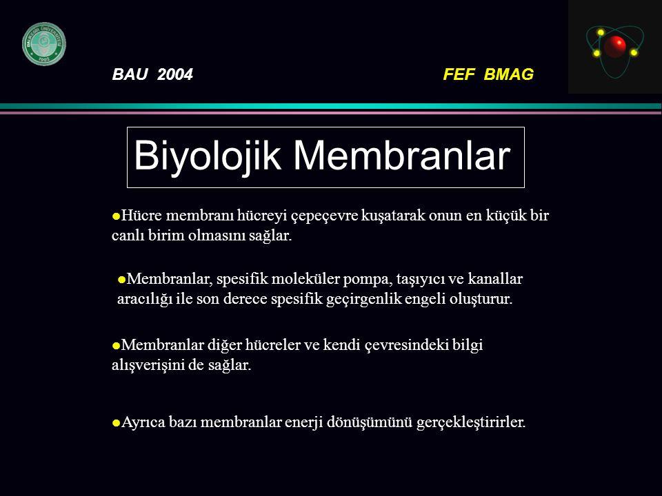 BAU 2004FEF BMAG Biyolojik Membranlar Hücre membranı hücreyi çepeçevre kuşatarak onun en küçük bir canlı birim olmasını sağlar. l Membranlar, spesifik