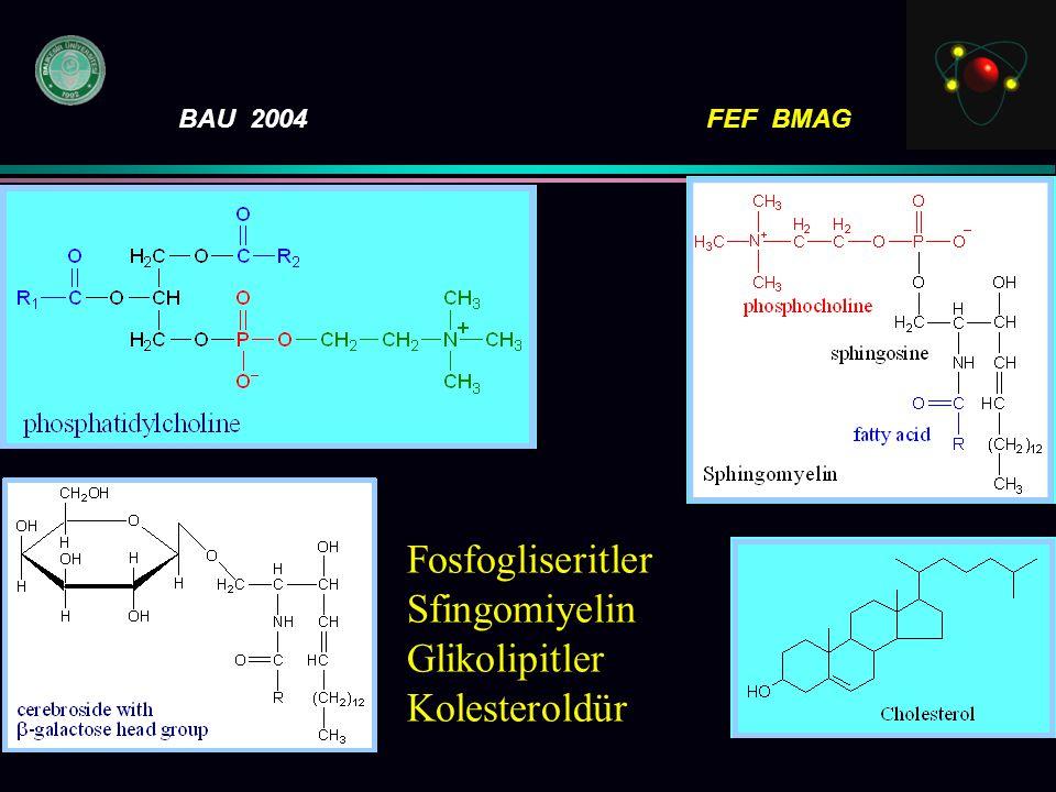 BAU 2004FEF BMAG F osfogliseritler S fingomiyelin G likolipitler K olesteroldür