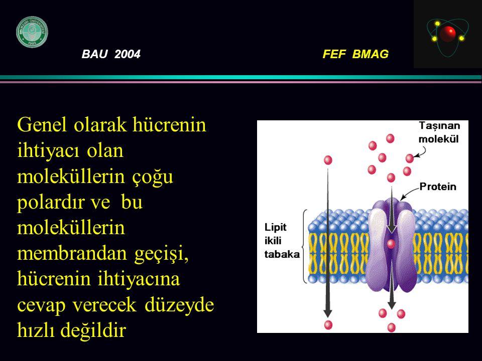 BAU 2004FEF BMAG Genel olarak hücrenin ihtiyacı olan moleküllerin çoğu polardır ve bu moleküllerin membrandan geçişi, hücrenin ihtiyacına cevap verece