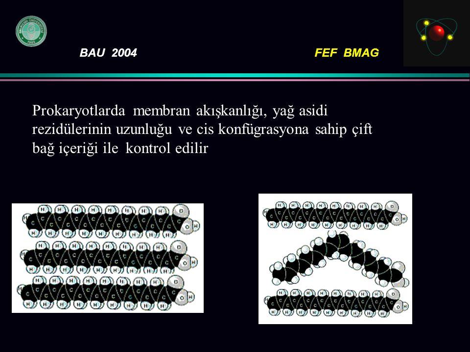 BAU 2004FEF BMAG Prokaryotlarda membran akışkanlığı, yağ asidi rezidülerinin uzunluğu ve cis konfügrasyona sahip çift bağ içeriği ile kontrol edilir