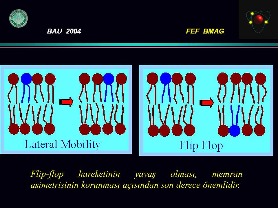 BAU 2004FEF BMAG Flip-flop hareketinin yavaş olması, memran asimetrisinin korunması açısından son derece önemlidir.