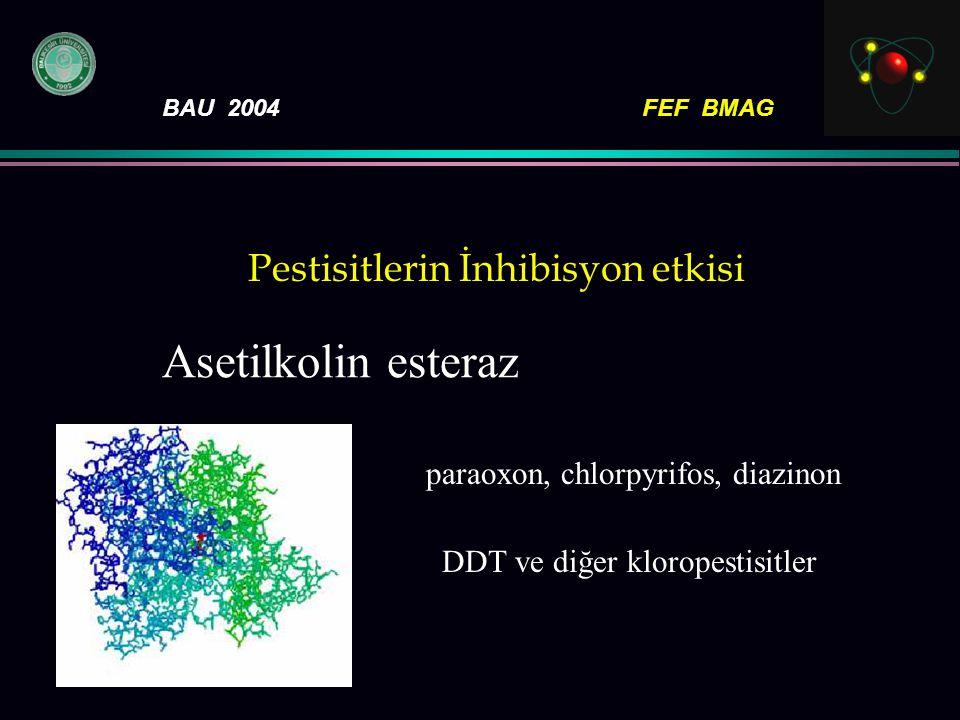 BAU 2004FEF BMAG Pestisitlerin İnhibisyon etkisi paraoxon, chlorpyrifos, diazinon DDT ve diğer kloropestisitler Asetilkolin esteraz