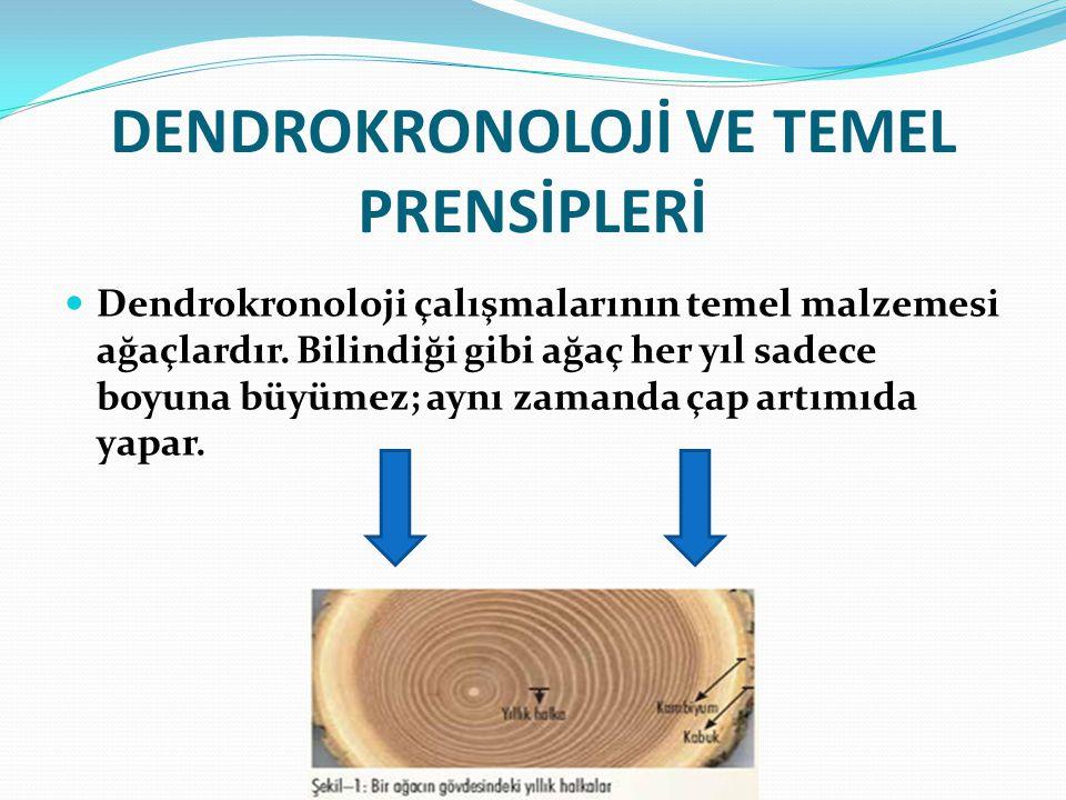 DENDROKRONOLOJİ VE TEMEL PRENSİPLERİ Dendrokronoloji çalışmalarının temel malzemesi ağaçlardır. Bilindiği gibi ağaç her yıl sadece boyuna büyümez; ayn
