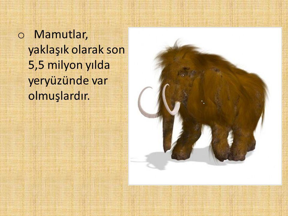 o Mamutlar, yaklaşık olarak son 5,5 milyon yılda yeryüzünde var olmuşlardır.