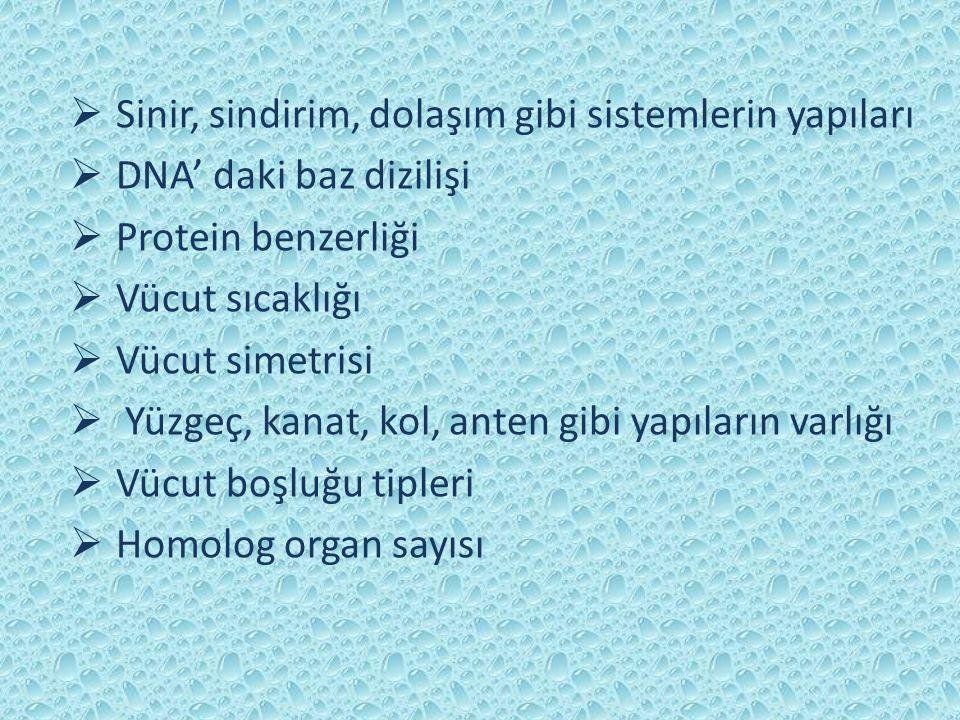  Sinir, sindirim, dolaşım gibi sistemlerin yapıları  DNA' daki baz dizilişi  Protein benzerliği  Vücut sıcaklığı  Vücut simetrisi  Yüzgeç, kanat