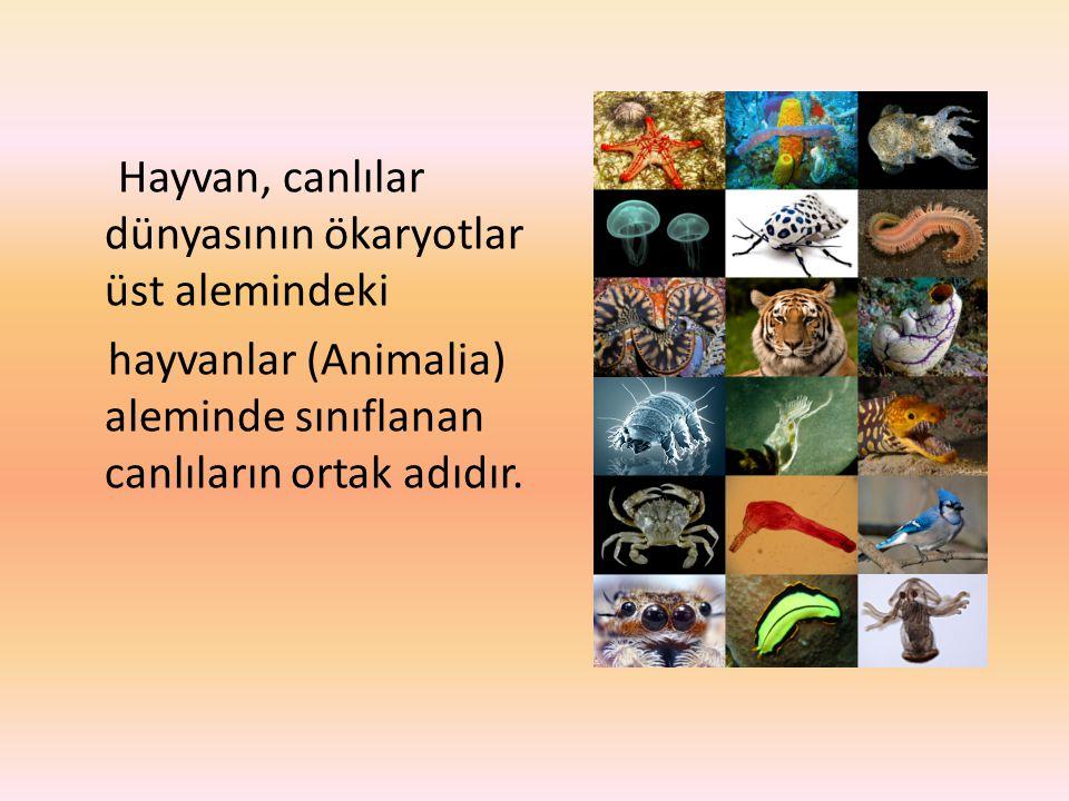 Hayvan, canlılar dünyasının ökaryotlar üst alemindeki hayvanlar (Animalia) aleminde sınıflanan canlıların ortak adıdır.