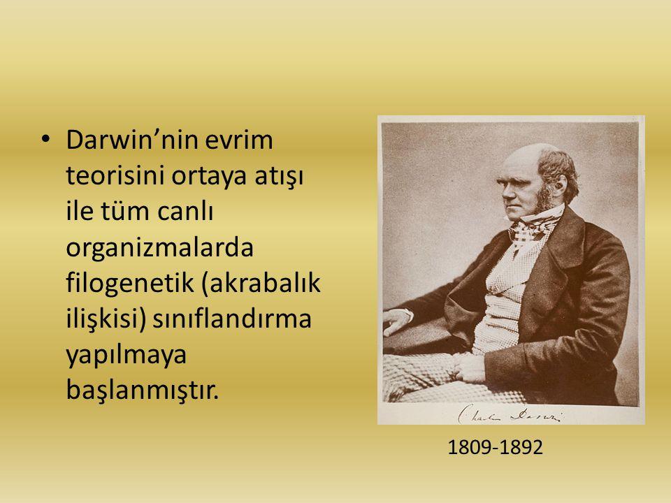 Darwin'nin evrim teorisini ortaya atışı ile tüm canlı organizmalarda filogenetik (akrabalık ilişkisi) sınıflandırma yapılmaya başlanmıştır. 1809-1892