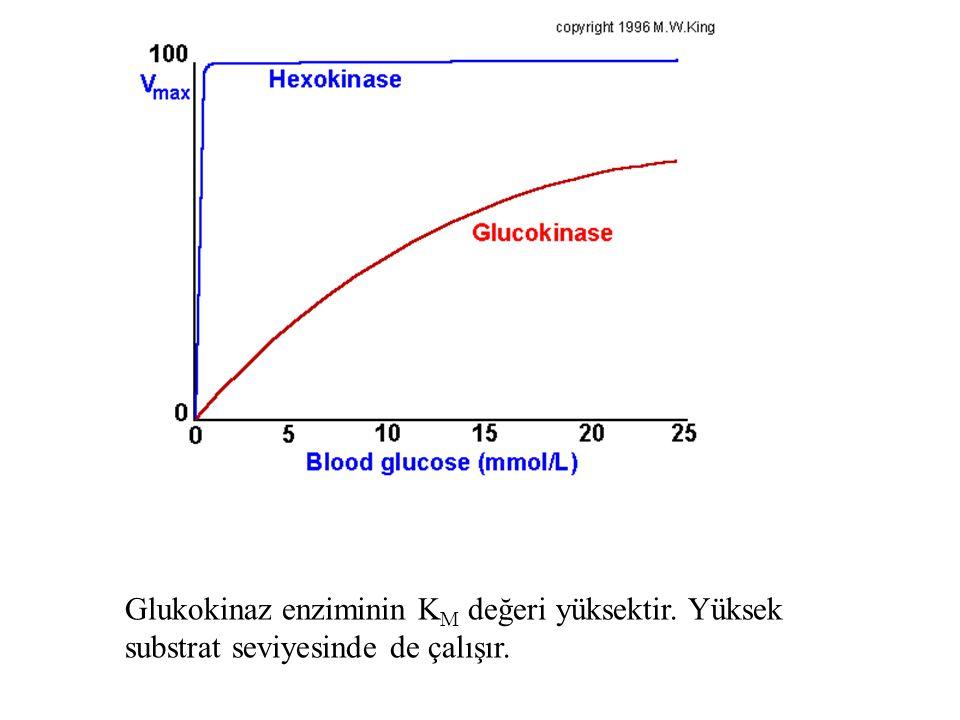 Glukokinaz enziminin K M değeri yüksektir. Yüksek substrat seviyesinde de çalışır.