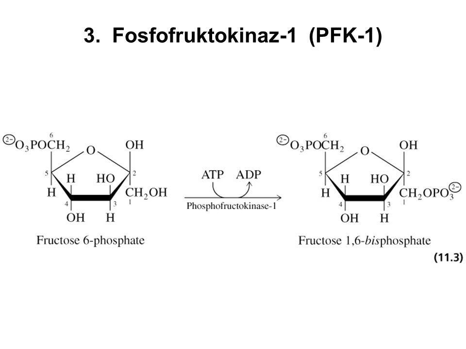 3. Fosfofruktokinaz-1 (PFK-1)