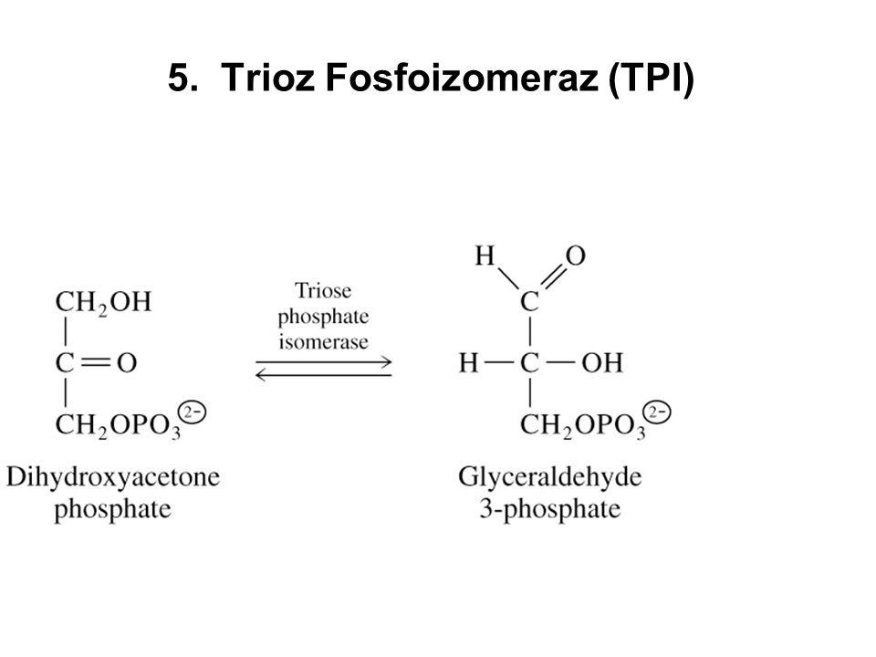 5. Trioz Fosfoizomeraz (TPI)