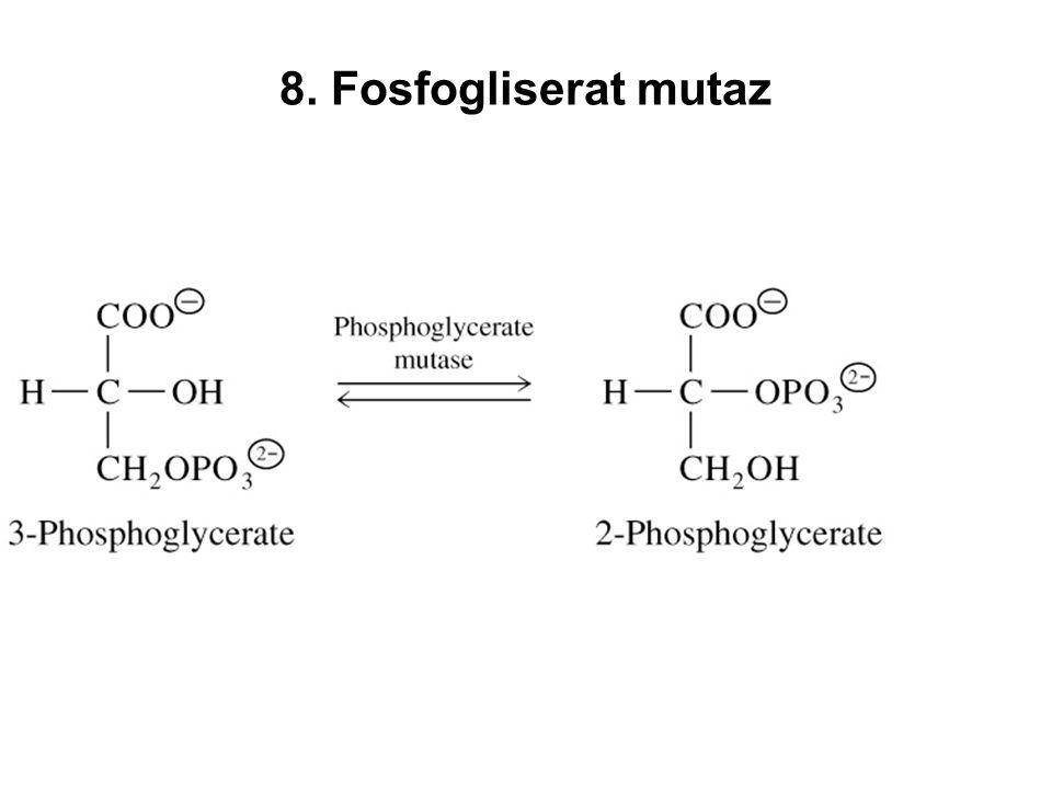 8. Fosfogliserat mutaz