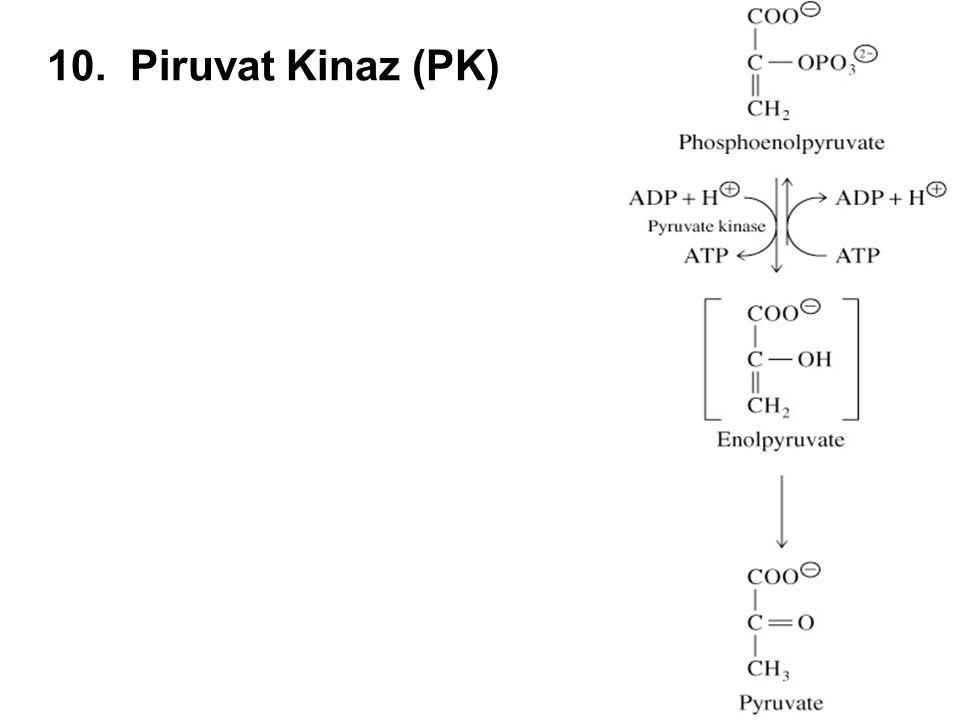 10. Piruvat Kinaz (PK)