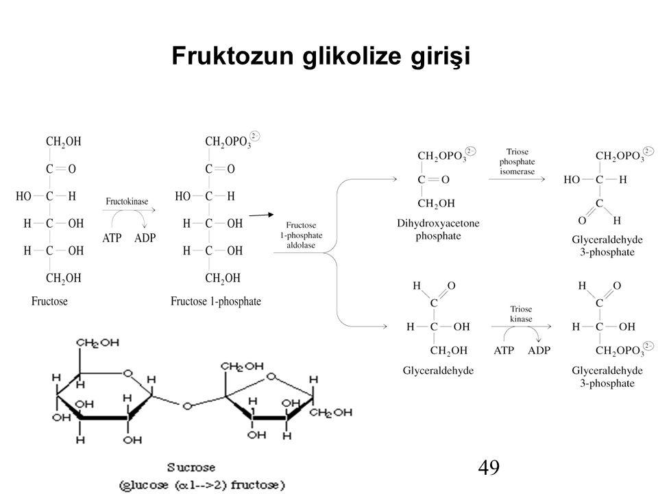 Prentice Hall c2002 Chapter 1149 Fruktozun glikolize girişi