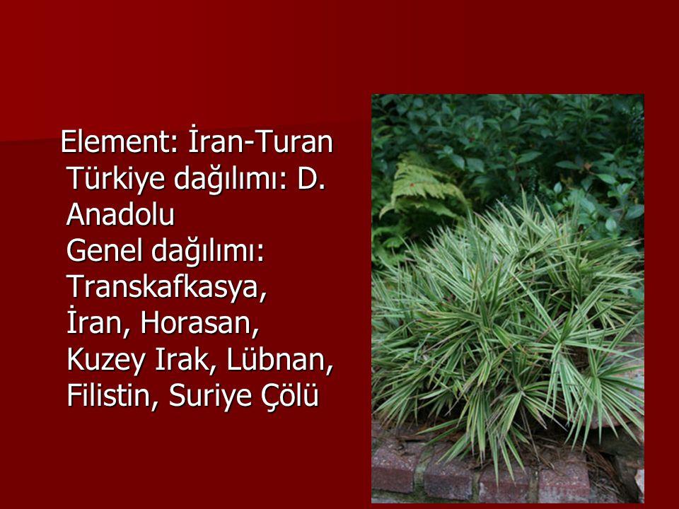 Element: İran-Turan Türkiye dağılımı: D. Anadolu Genel dağılımı: Transkafkasya, İran, Horasan, Kuzey Irak, Lübnan, Filistin, Suriye Çölü Element: İran