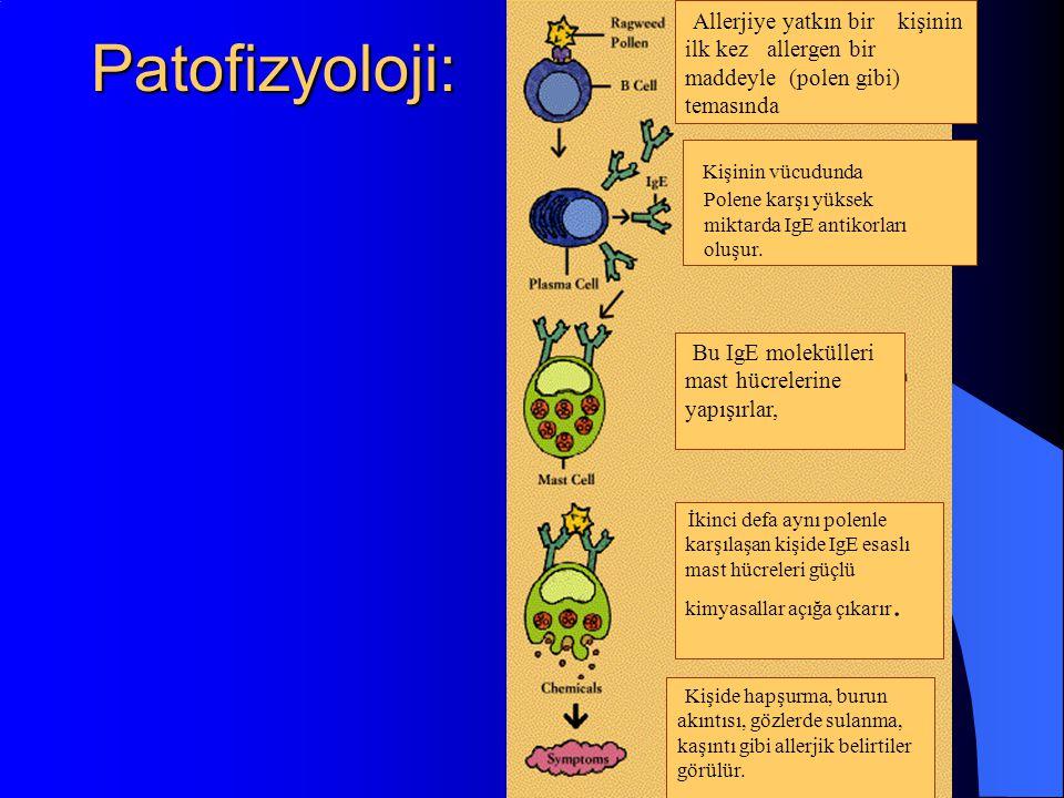 Patofizyoloji: Allerjiye yatkın bir kişinin ilk kez allergen bir maddeyle (polen gibi) temasında Kişinin vücudunda Polene karşı yüksek miktarda IgE antikorları oluşur.