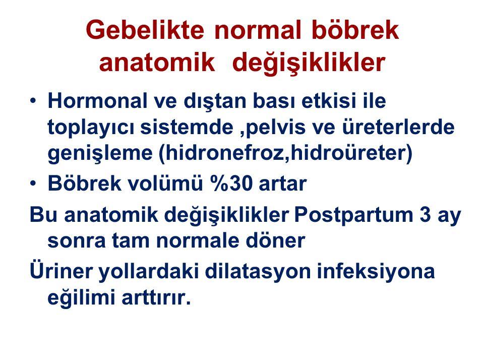 Gebelikte normal böbrek anatomik değişiklikler Hormonal ve dıştan bası etkisi ile toplayıcı sistemde,pelvis ve üreterlerde genişleme (hidronefroz,hidr