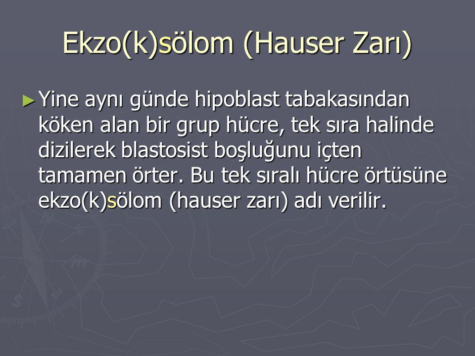 Ekzo(k)sölom (Hauser Zarı) ► Yine aynı günde hipoblast tabakasından köken alan bir grup hücre, tek sıra halinde dizilerek blastosist boşluğunu içten tamamen örter.