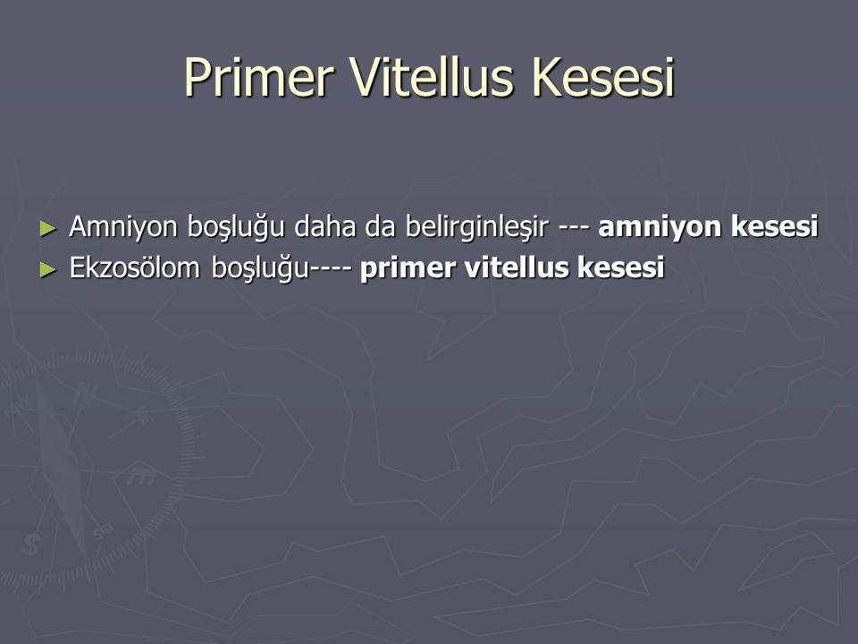 Primer Vitellus Kesesi ► Amniyon boşluğu daha da belirginleşir --- amniyon kesesi ► Ekzosölom boşluğu---- primer vitellus kesesi
