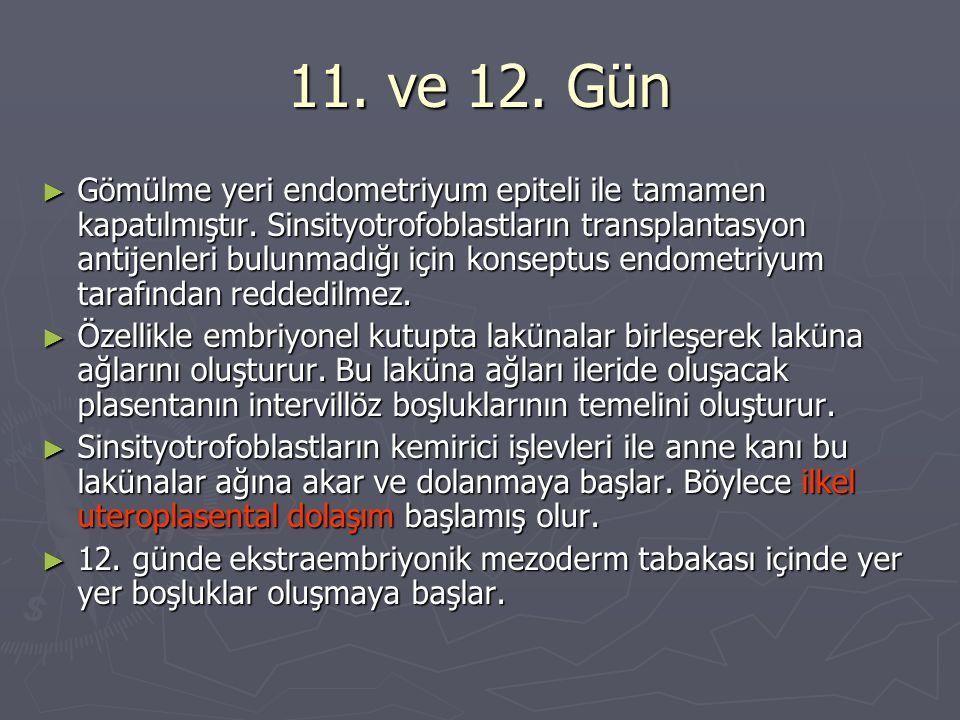11. ve 12. Gün ► Gömülme yeri endometriyum epiteli ile tamamen kapatılmıştır. Sinsityotrofoblastların transplantasyon antijenleri bulunmadığı için kon
