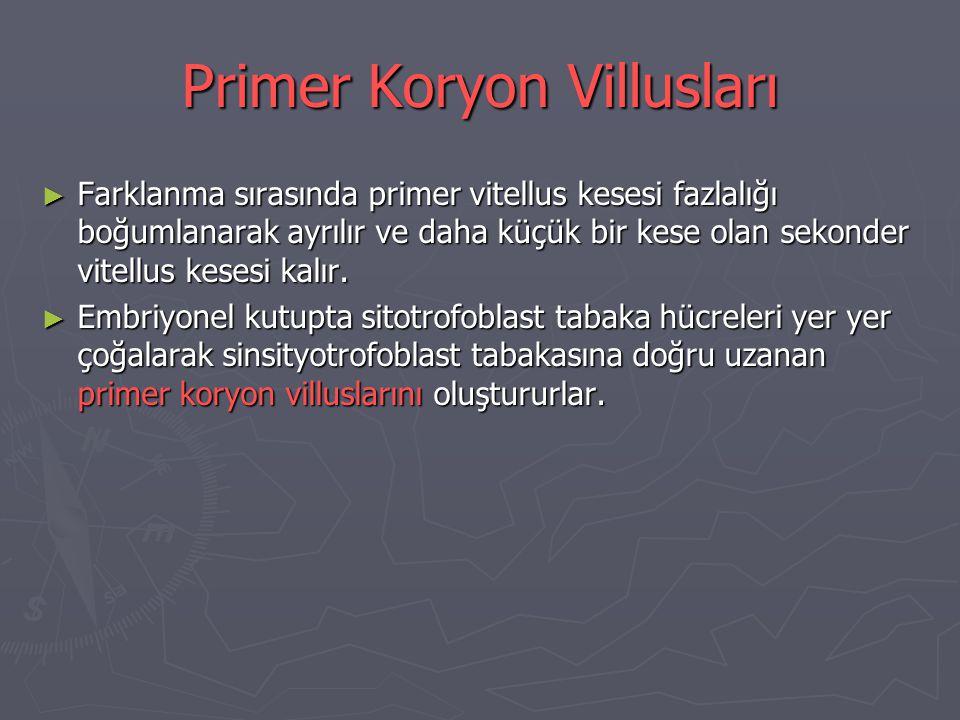 Primer Koryon Villusları ► Farklanma sırasında primer vitellus kesesi fazlalığı boğumlanarak ayrılır ve daha küçük bir kese olan sekonder vitellus kesesi kalır.