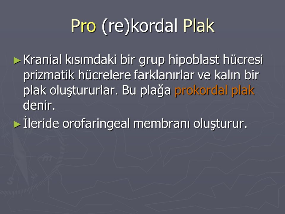 Pro (re)kordal Plak ► Kranial kısımdaki bir grup hipoblast hücresi prizmatik hücrelere farklanırlar ve kalın bir plak oluştururlar. Bu plağa prokordal