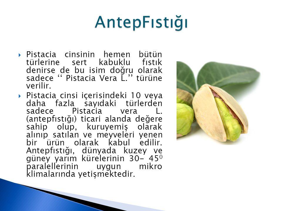  Pistacia cinsinin hemen bütün türlerine sert kabuklu fıstık denirse de bu isim doğru olarak sadece '' Pistacia Vera L.'' türüne verilir.  Pistacia