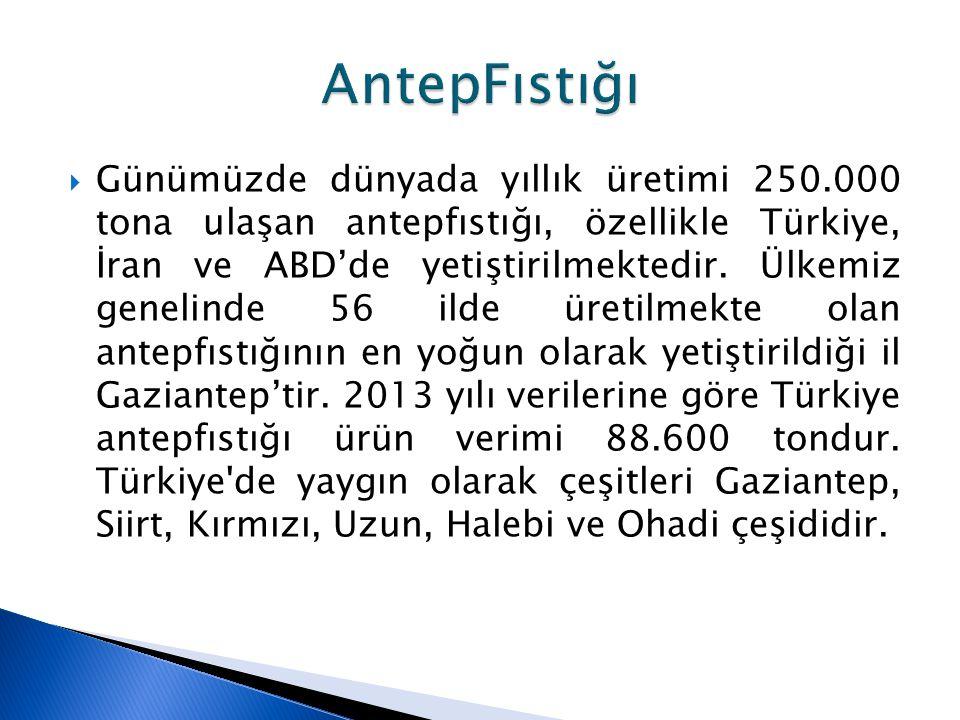  Günümüzde dünyada yıllık üretimi 250.000 tona ulaşan antepfıstığı, özellikle Türkiye, İran ve ABD'de yetiştirilmektedir. Ülkemiz genelinde 56 ilde ü