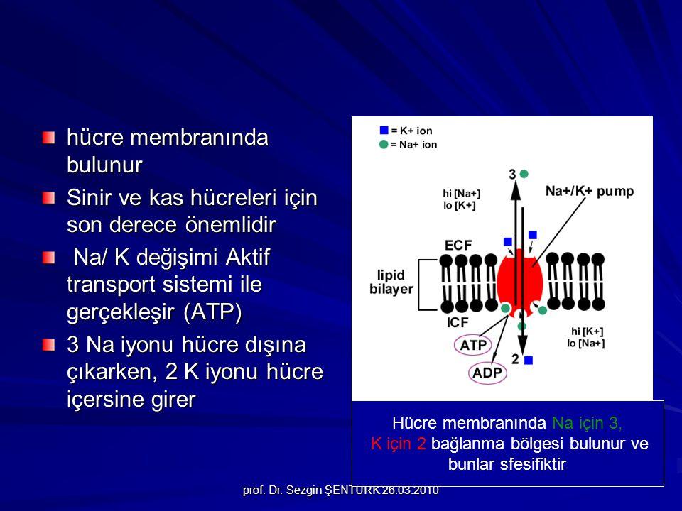 prof. Dr. Sezgin ŞENTÜRK 26.03.2010 hücre membranında bulunur Sinir ve kas hücreleri için son derece önemlidir Na/ K değişimi Aktif transport sistemi