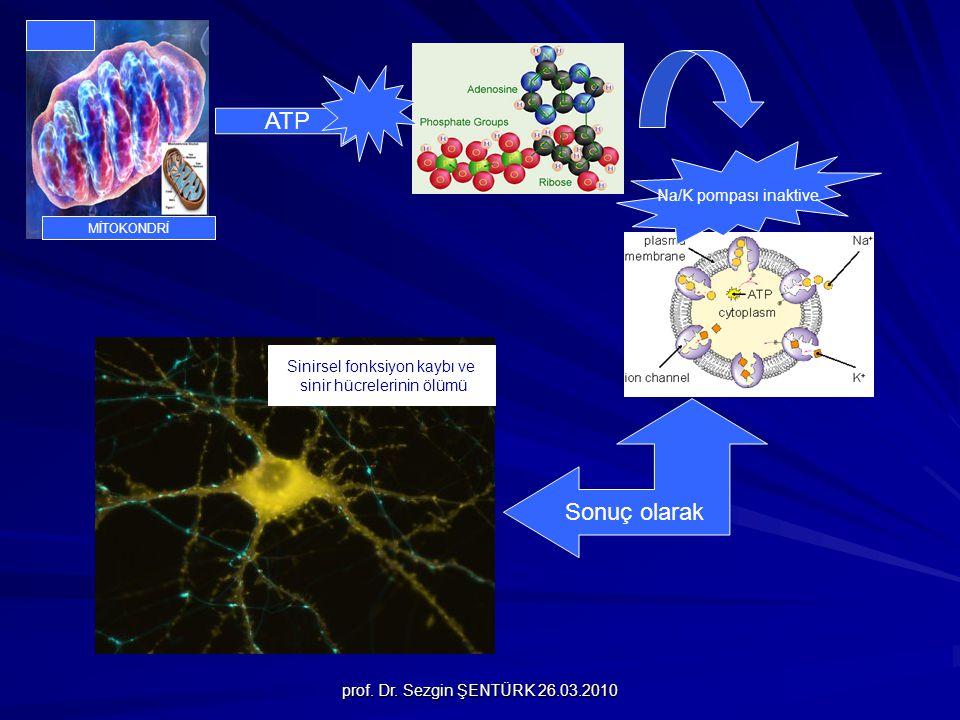 prof. Dr. Sezgin ŞENTÜRK 26.03.2010 MİTOKONDRİ ATP Na/K pompası inaktive Sonuç olarak Sinirsel fonksiyon kaybı ve sinir hücrelerinin ölümü