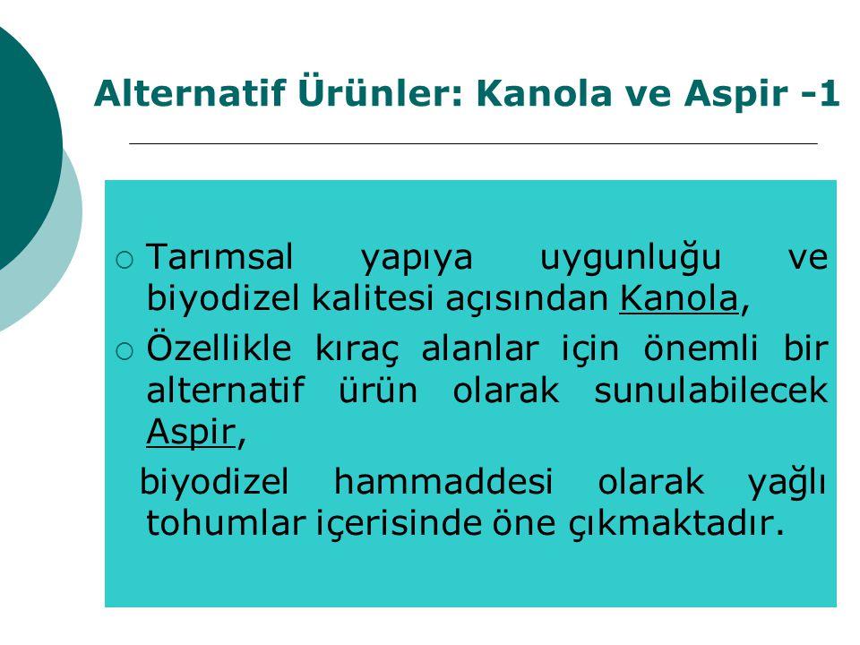 Alternatif Ürünler: Kanola ve Aspir -1  Tarımsal yapıya uygunluğu ve biyodizel kalitesi açısından Kanola,  Özellikle kıraç alanlar için önemli bir alternatif ürün olarak sunulabilecek Aspir, biyodizel hammaddesi olarak yağlı tohumlar içerisinde öne çıkmaktadır.