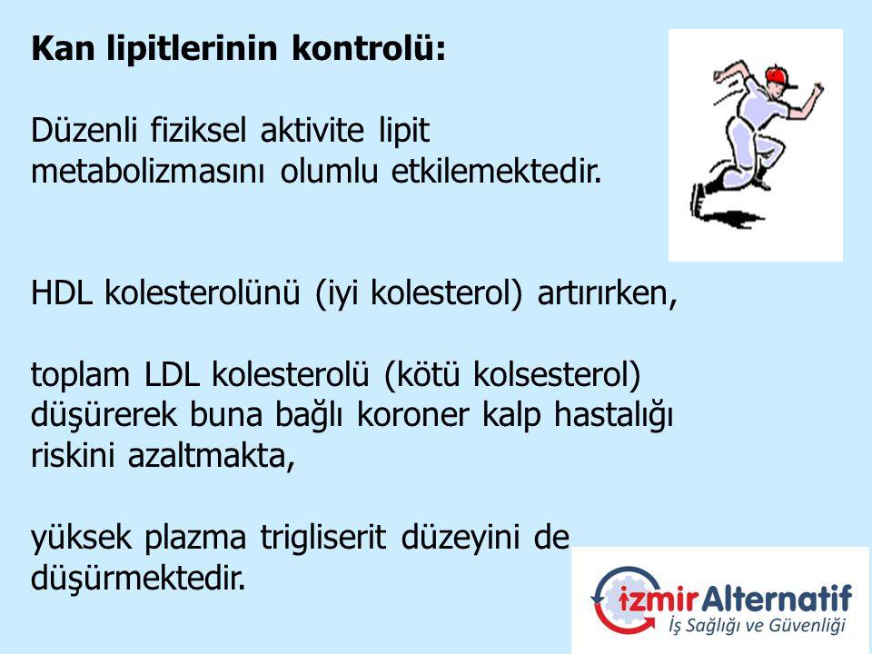 Kan lipitlerinin kontrolü: Düzenli fiziksel aktivite lipit metabolizmasını olumlu etkilemektedir.