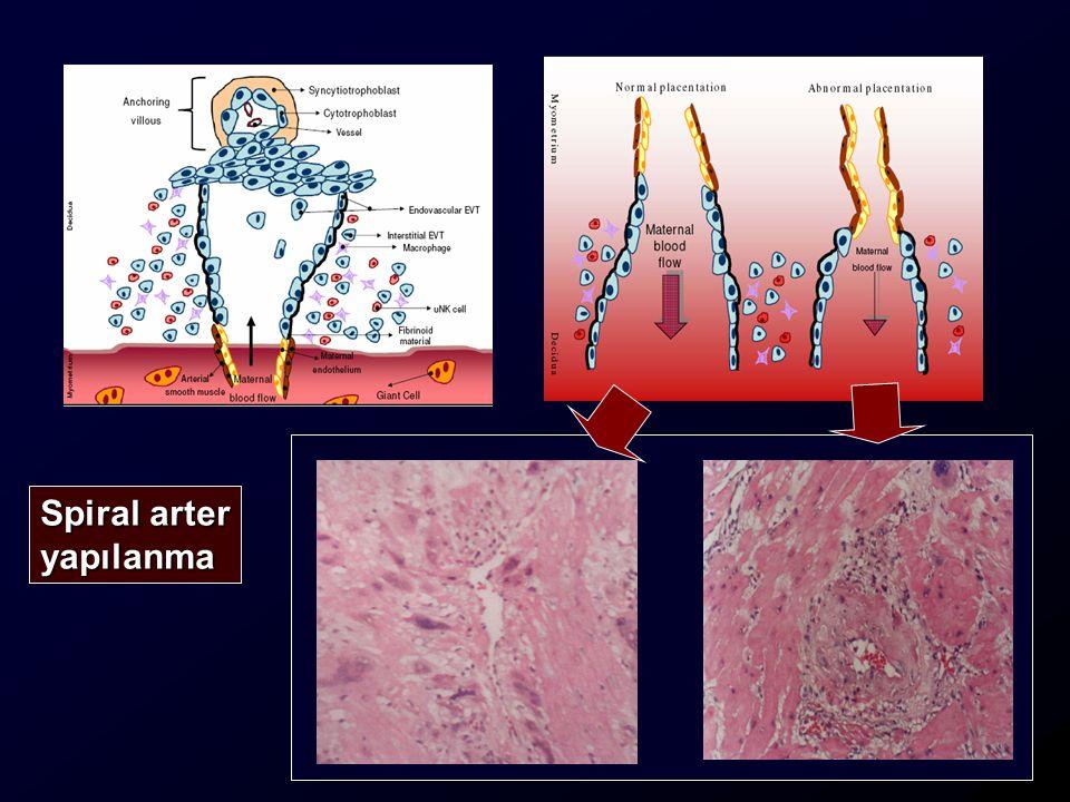Sitotrofoblast Kök Hücre Ekstra Villöz Yol Villöz Yol VillözSTB ST Transport ve Endokrin Fonksiyonlar STBKolon EndovaskülerSTBİntersisyelSTB Spiral arter yapılanma Desidua ve myometriyum invazyon