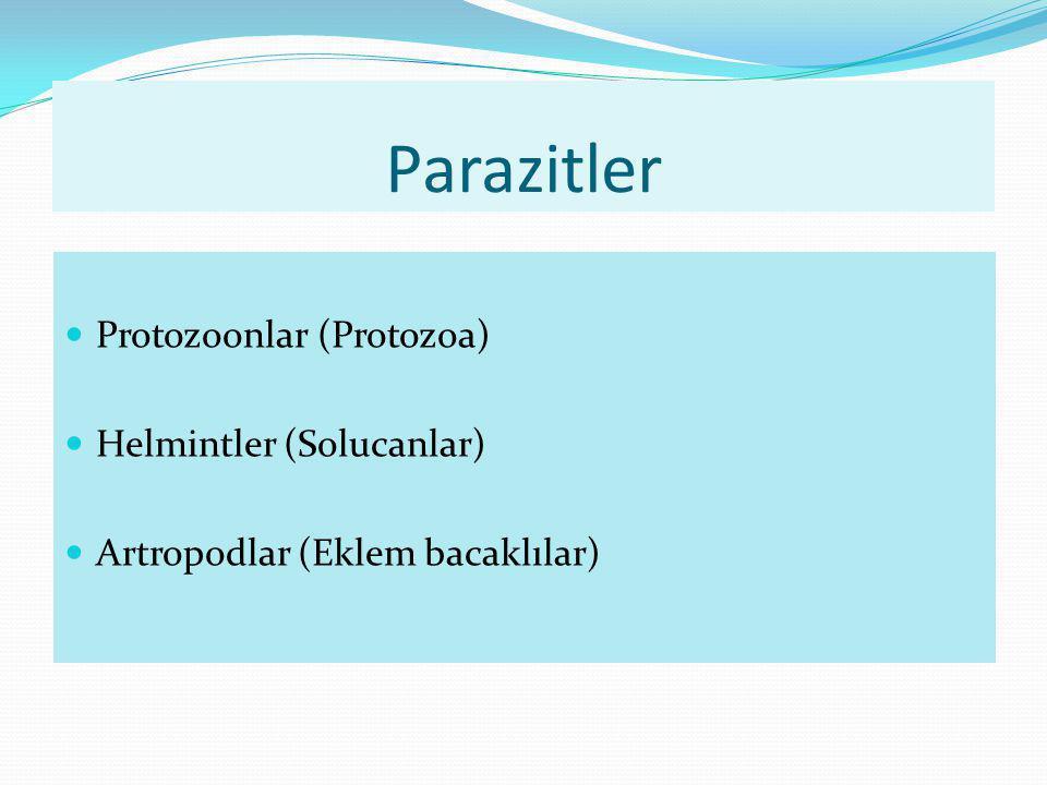 Parazitler Protozoonlar (Protozoa) Helmintler (Solucanlar) Artropodlar (Eklem bacaklılar)