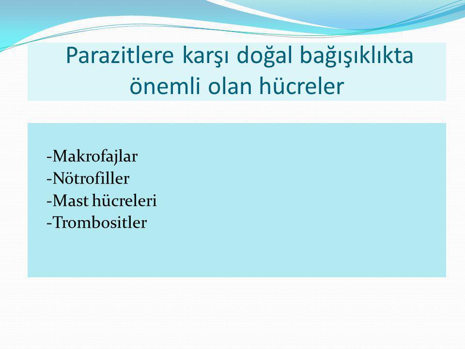 Parazitlere karşı doğal bağışıklıkta önemli olan hücreler -Makrofajlar -Nötrofiller -Mast hücreleri -Trombositler