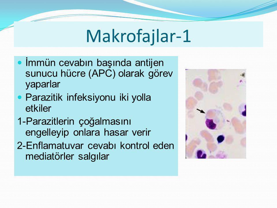 Makrofajlar-1 İmmün cevabın başında antijen sunucu hücre (APC) olarak görev yaparlar Parazitik infeksiyonu iki yolla etkiler 1-Parazitlerin çoğalmasın